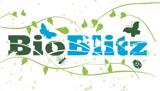 Hengistbury Head BioBlitz this Saturday!