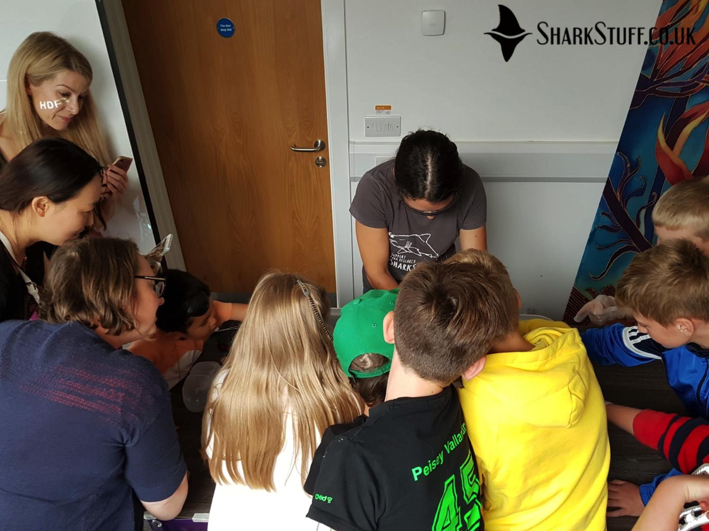SharkStuff:Live! Success in Devon