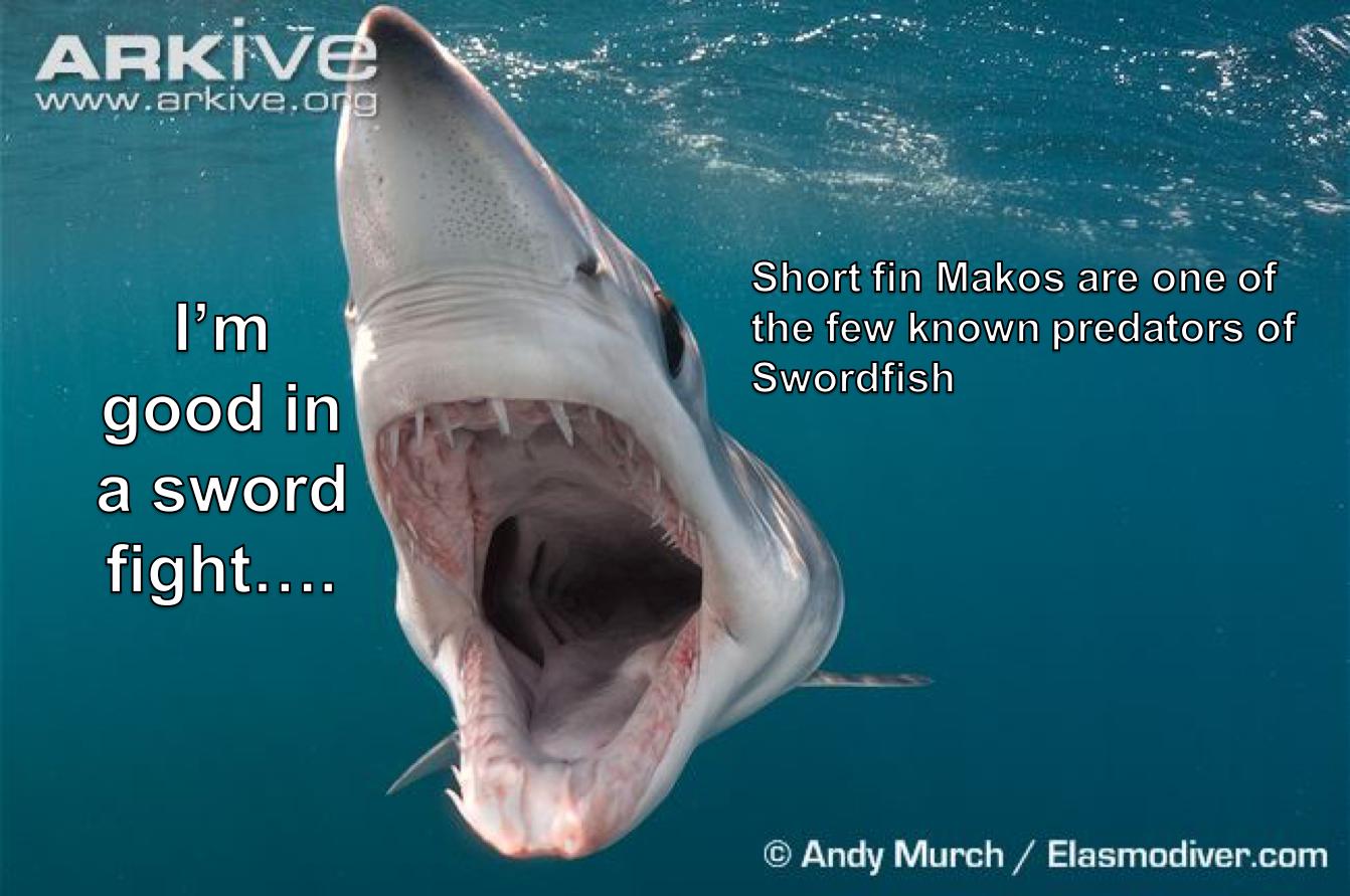 Shark Meme Monday #2
