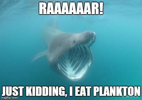 Shark Meme Monday #6 Round Up
