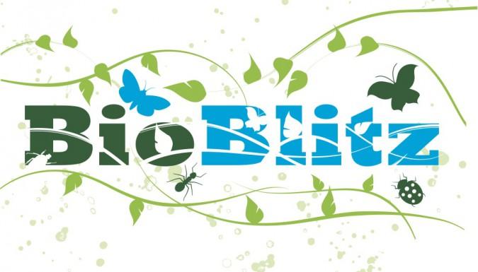 Hengistbury Head BioBlitz this Saturday!